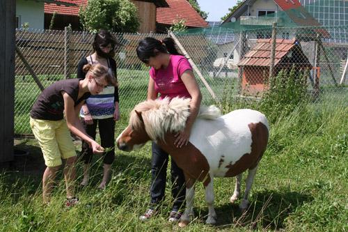 pony_tiere-hofleben_haus-sonnenschein